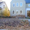 native birches and grasses with bluestone stairs and patio in st. paul
