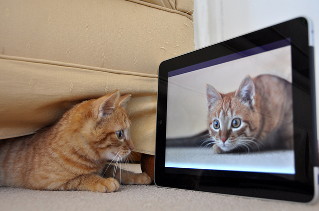 Cat iPad Video